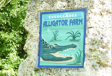 alligator-farm