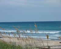 palm-beach